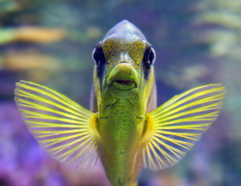 Aigua d'osmosi i aquari