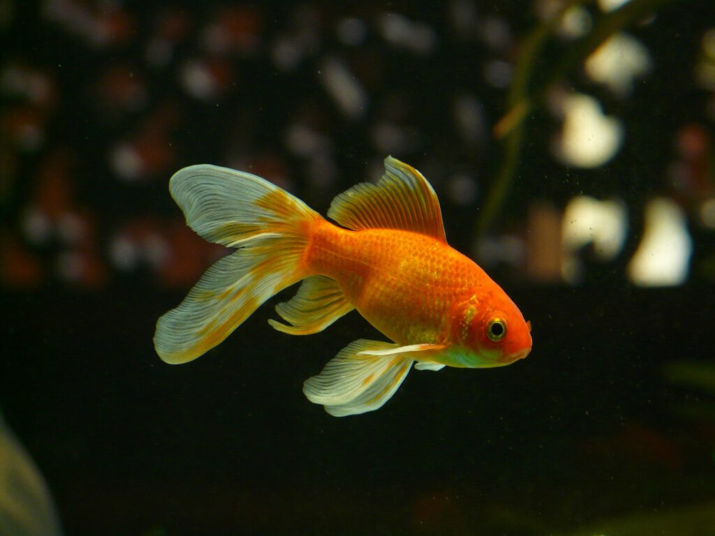 Un peix que tindrà una millor vida gràcies a l'aigua d'osmosi